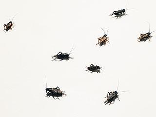 High School Seniors Release Hundreds of Crickets as Prank