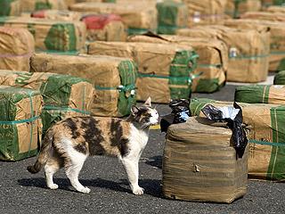 New Zealand Cat Delivers Free Bag of Marijuana to Owner's Doorstep