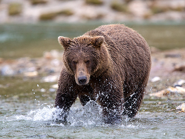 Woman Says She Played Dead to Stay Alive During Alaska Bear Attack| Animals & Pets, Real People Stories