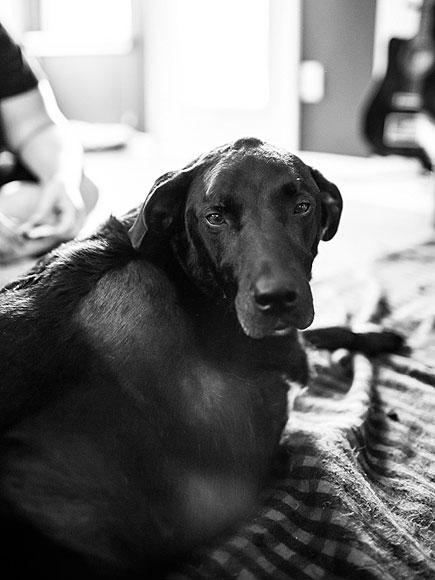 Photo Diary of Dog's Last Day Inspires Owners to Share Their Stories of Loving and Losing Pets  Animals & Pets, Dogs, Around the Web