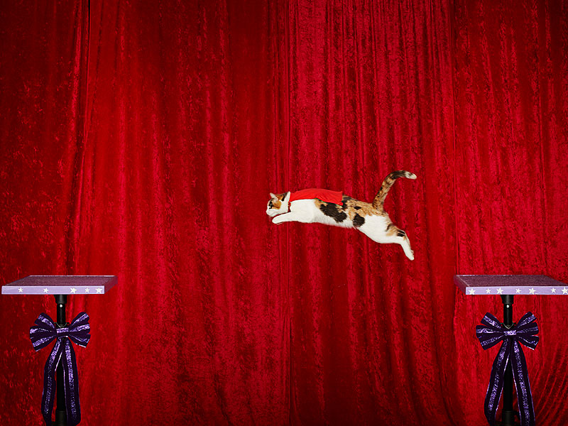 Flying Cats and Lengthy Tongues: Meet Guinness's Bizarre New Record Breakers  Cats, Amazing Stories, Around the Web, Real People Stories