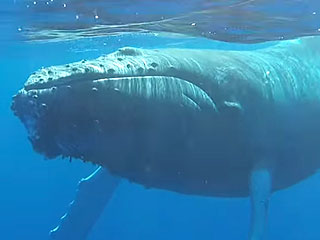 This Is What It's Like to Be 20 Feet from a Sleeping Whale (VIDEO)