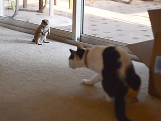 Watch a Baby Prairie Dog & Cat Become BFFs