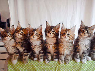Are These 7 Dancing Kittens the Next 'NSYNC? (VIDEO)