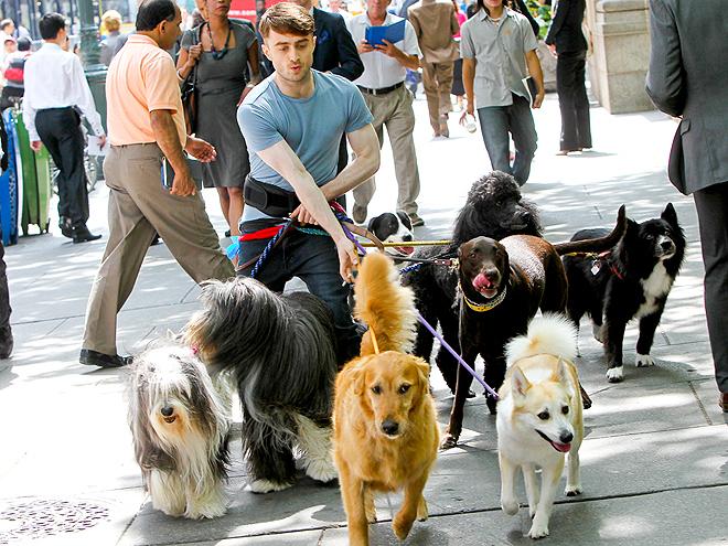 LEASH ON LIFE photo | Daniel Radcliffe