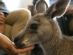 Watch What Happens When a Kangaroo Holds Court at the PEOPLE Offices