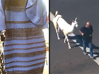 Lessons from #TheDress, Llama Chase & More Internet Freak-Outs