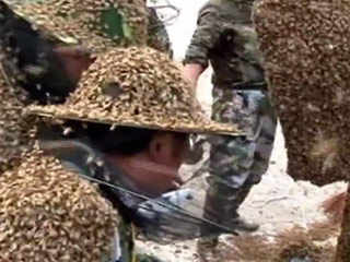 Beekeeper Sets New Guinness Record by Covering Himself in More Than 1 Million Bees: VIDEO