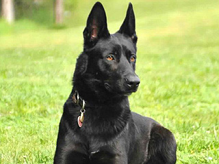 Police Dog Saves Deputy During Frightening Ambush on Remote Mississippi Highway