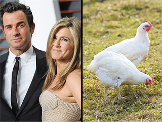 Meet Justin and Jen – The Chickens