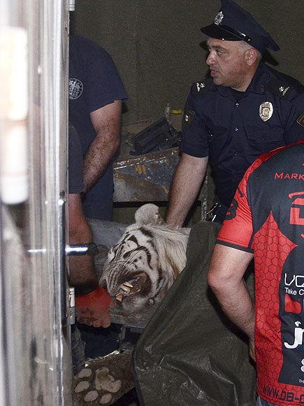 Zoo Animals Escape In Tbilisi Georgia After Flood