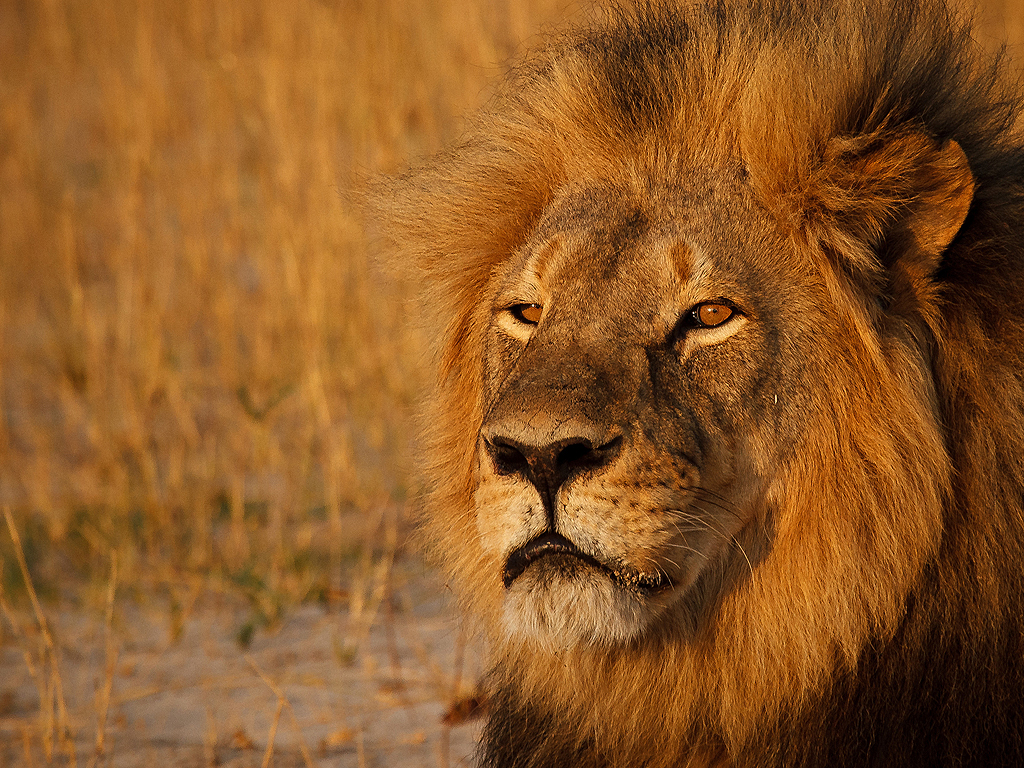 Cecil the Lion: Patient Says Minnesota Dentist Didn't Talk About Hunting