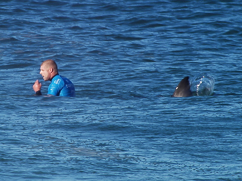 Surfer Mick Fanning Spots Another Shark in First Return to the Water