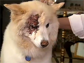 Florida Man Not Charged for Shooting Dog in Eye, Locals Protest in Front of His Home