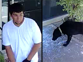 Alleged Burglars Feed Shattered Glass to Residents' Dog