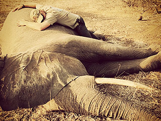 Prince Harry Moves 262 Elephants to Safety