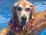 10 Pets Who Are Having a Waaaay Better Summer Than You