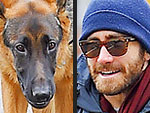 Stars and Their Pets | Stars and Pets, Jake Gyllenhaal
