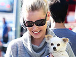 Stars and Their Pets | Stars and Pets, Katherine Heigl