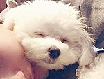 The Cutest Celeb Pet Instagrams of the Week | Demi Lovato