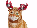 The Best Gifts for Your Cat Based on Santa's Squad of Famous Reindeer