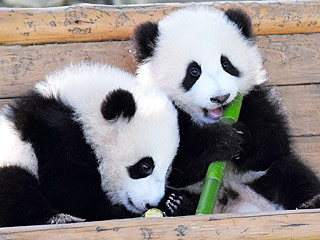 Meet Your Daily Panda Quota with This Baby Panda Party (PHOTOS)