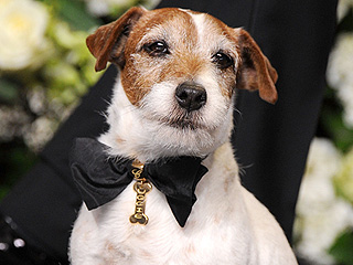 Remembering Uggie: The Oscar-Winning Pup Every Celebrity Adored