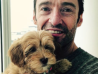 Update: Hugh Jackman's Cute New Pup Has a Name | Hugh Jackman