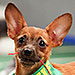The Most FOMO-Inducing Photos from Uber's Puppy Bowl Office Deliveries