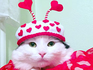 5 Health Benefits of Loving a Pet This Valentine's Day
