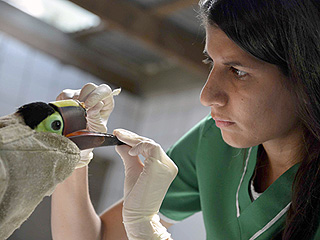 The Daily Treat: Costa Rican Toucan to Receive 3D Printed Prosthetic Beak
