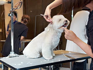 We Need to Talk About the Latest Dog Grooming Craze in Taiwan