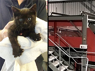 Miracle Kitten Accidentally Rides Through Industrial Shredder and Emerges Without a Scratch