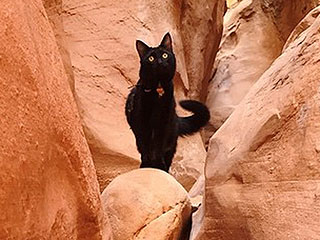Climber Takes Cat on Hikes, Adventurous Adorableness Ensues