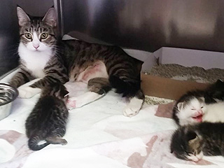 Abandoned Mother Cat and Kittens Saved from Sealed Hot Box