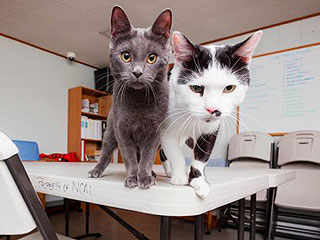 Adopt Us! It's Hard to Fur-get Cats Patrick and Woody