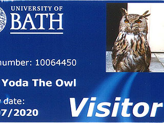 "British University Gives Owl Named ""Yoda"" an ID Card"