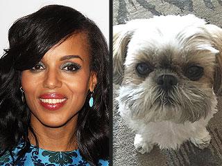 Kerry Washington: Josh Malina Likes My Dog More Than He Likes Me