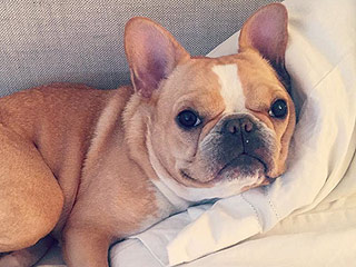 Chloe the Mini Frenchie Is the B*tchelorette! Find Out Which Dog Wins Her Heart