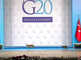 Wild Week Recap: Cats Drop in on G20 and Other Surprise Animal Appearances
