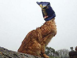 Cat with Potato Chip Bag on Head Saved from Rooftop