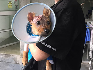 Puppy Punished with Boiling Water for Chewing on Phone Finds New Home