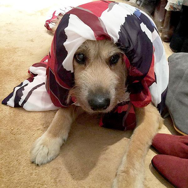 Eva Mendes dresses Ryan Gosling's dog