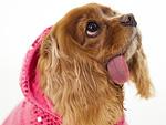 We Let the Internet's Most Stylish Dog Raid the PEOPLE Pets Fashion Closet