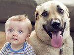 The Snuggle Is Real: Dogs Cuddling with Babies