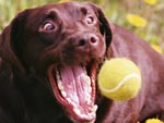 The Snuggle Is Real: 5 Dogs Who Are the Worst at Catching