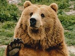 The Snuggle Is Real: Bears Acting Like Humans – It's as Glorious as It Sounds