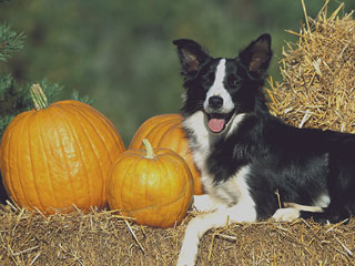 The Snuggle Is Real: We're Thankful for These Clips of Cute Animals Eating Pumpkins