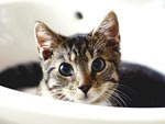 The Snuggle Is Real: Cats Bathing in Sinks Like It's No Big