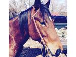 Giddy Up! Gwen Stefani Gets the 'Best Present Ever' – a Horse Named Halo